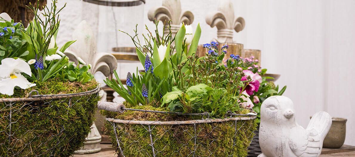 Blumenladen Detmold blumen leßmann blumenfachgeschäft friedhofsgärtnerei seit 1912